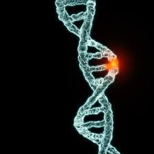 genetic 1