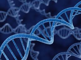 genetic 2