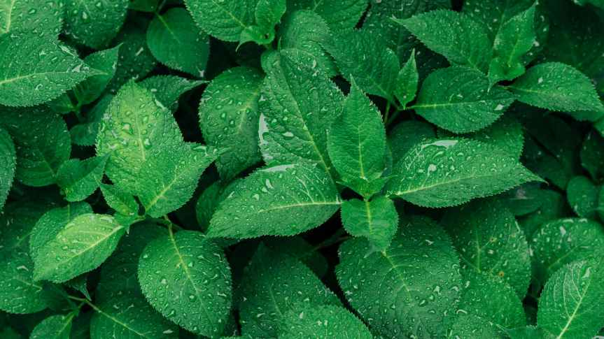 Herbs That Assist WithNervousness